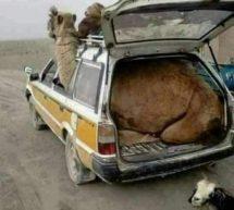 فوضوية النقل في البلاد!!