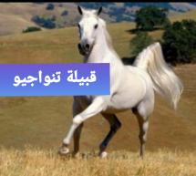 من ادب جيل الرواد وقفة مع الاديب أحمد فال بن بداده